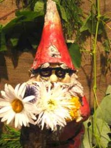 Gnome with eye glasses