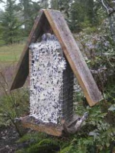 Suet feeders with Val's homemade suet