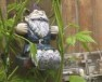 Gnome swinging in the hops vines